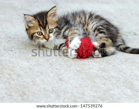 Little kitten playing with ball of wool - stock photo