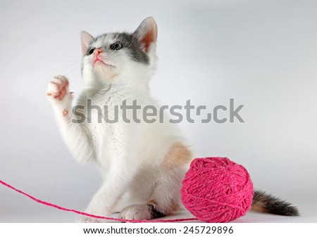 Little kitten playing with ball of yarn in studio - stock photo
