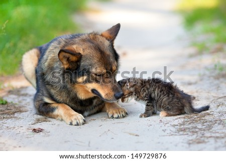 Little kitten pressed against the big dog - stock photo