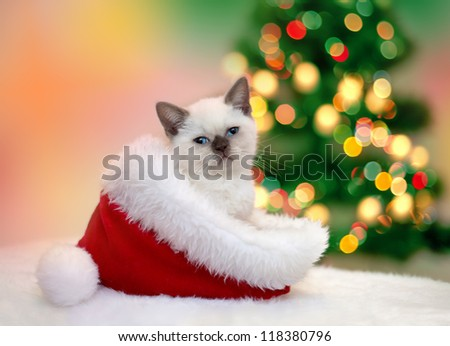 Little kitten sitting in Santa's hat against  fir tree with Christmas lights - stock photo