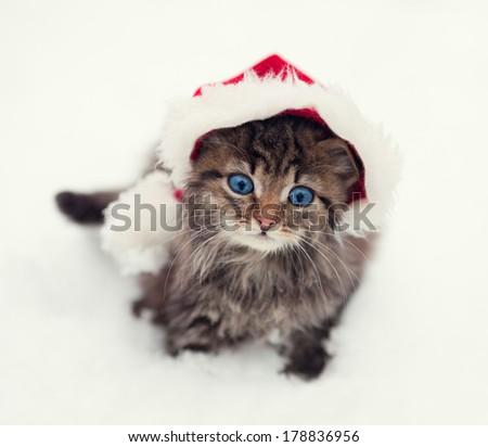 Little kitten wearing Santa's hat outdoors - stock photo