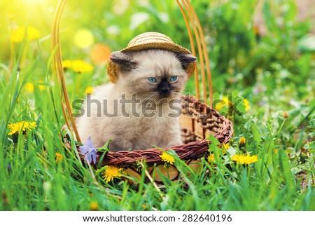 Little kitten wearing straw hat in a basket on dandelion lawn - stock photo