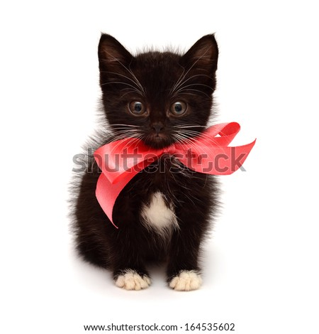 Little kitten with a bow isolated on white background - stock photo