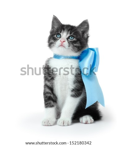 Little kitten with a bow on a white background - stock photo
