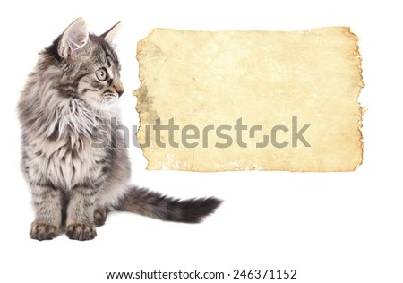 Little kitten with empty paper sheet isolated on white - stock photo