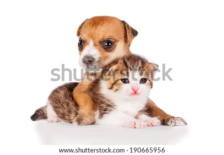 Little kitten with puppy isolated on white background