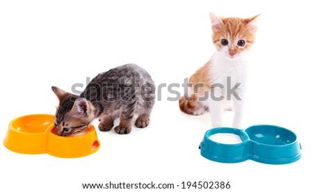 Little kittens drinking milk isolated on white - stock photo