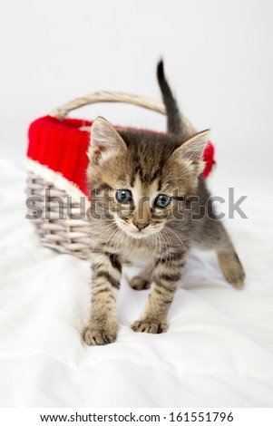 Little kittens got out of the wicker basket - stock photo