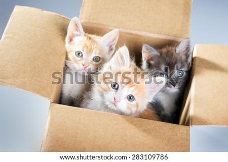 Little kittens in a cardboard box - stock photo