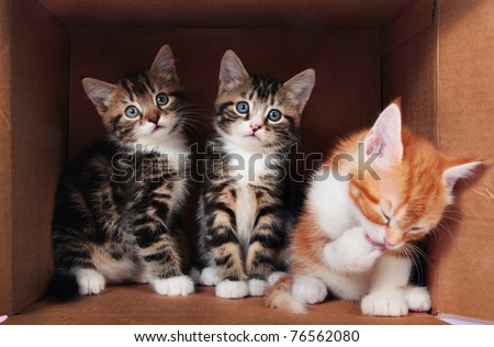 Little kittens in a cardboard box