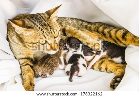 Little kittens in mother embrace. - stock photo