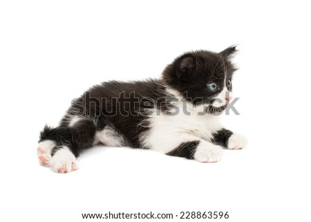 little kittens on white background