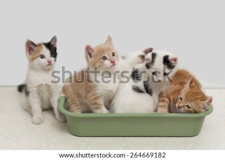 Little kittens sitting in cat toilet - stock photo