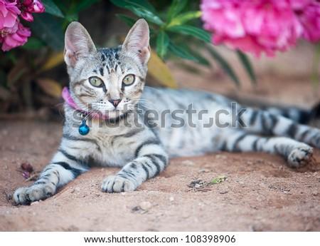 little kitty on the nature - stock photo