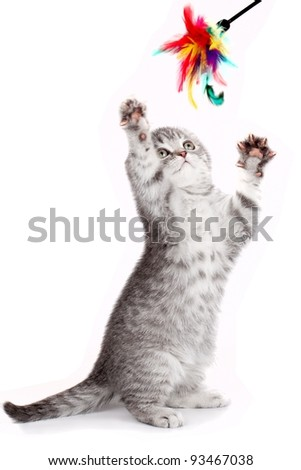 Little kitty playing with a toy - stock photo