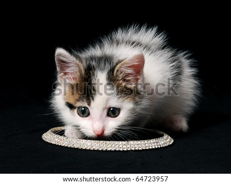 little kitty sniffing necklace - stock photo
