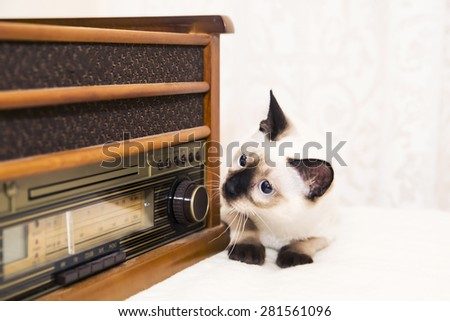 Little mekong bobtail looking at the radio - stock photo