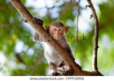 Little Monkey. baby macaque - stock photo
