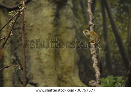 little monkey sitting on a vine in the rain forest - stock photo