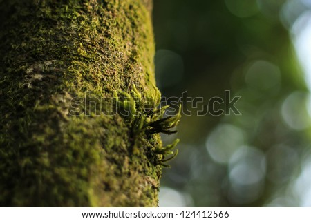Little moss growing on the tree in the rain forest