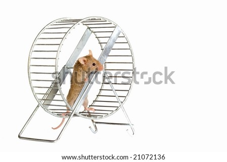 Little mouse in a wheel. - stock photo