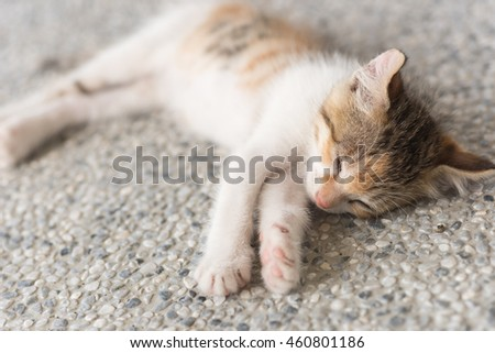 little newborn cat sleep, close up image