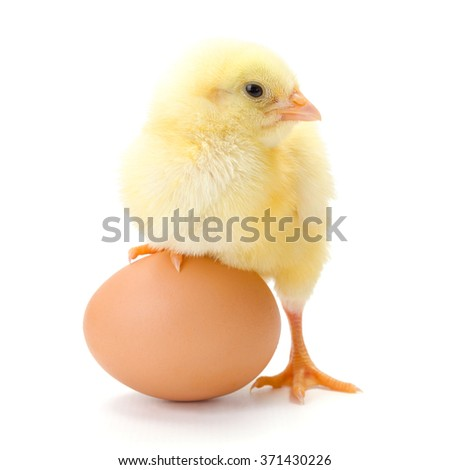 Little newborn chicken standing whit half leg on a whole egg - stock photo