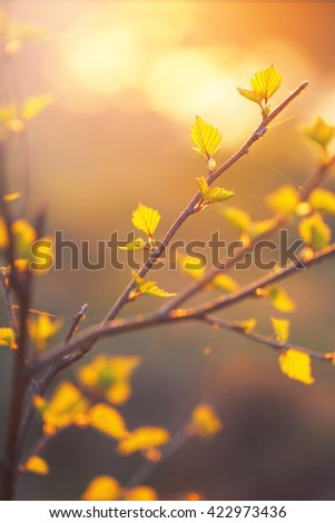little orange and yellow leaves on branch of tree on natural sunlight background. Summer fresh photo outdoor - stock photo