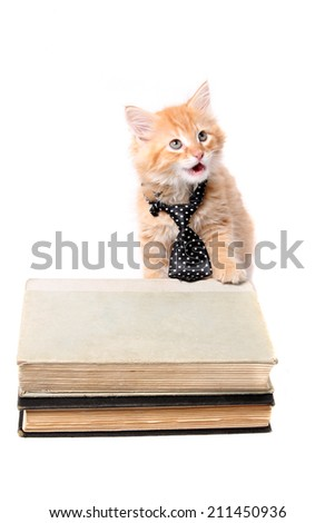 Little orange striped kitten wearing a tie with his paw on some text books and mouth open as if speaking and looking up - stock photo
