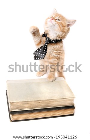 Little orange striped kitten wearing a tie with his paw on some text books looking up - stock photo