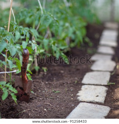 little organic/bio/permaculture garden - tomato vines in a greenhouse - stock photo