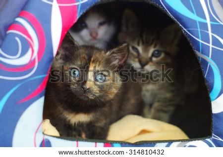 little orphaned kittens hiding in their den - stock photo