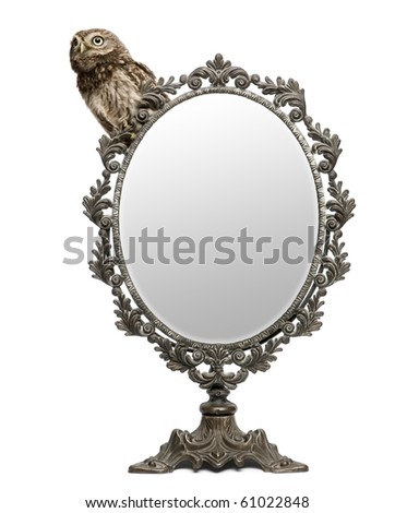 Little Owl, 50 days old, Athene noctua, in front of a white background with a mirror - stock photo