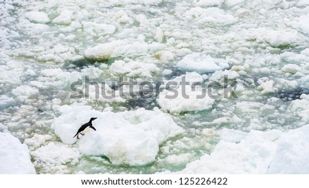 Little penguin on the ice of Antarctica. Antarctic region of the Southern Hemisphere, almost entirely south of the Antarctic Circle, and is surrounded by the Southern Ocean. - stock photo