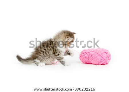 Little Persian tabby kitten playing a pink cotton wool on isolated background - stock photo