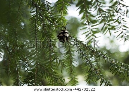 Little Pinecone. A Little Lonely Pinecone Hangs from the Branch of A Pine Tree with Bokeh in the Background. - stock photo