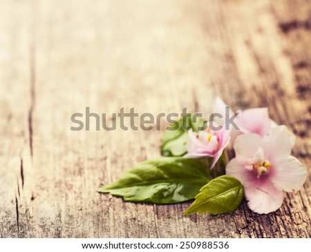 Little pink flowers on wooden table background, Spring flowers with green leaves, Spa background - stock photo