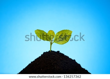 little plant in soil - stock photo