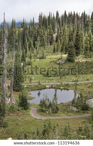 Little pond on Mount Revelstoke with the reflections of an eerie landscape - stock photo