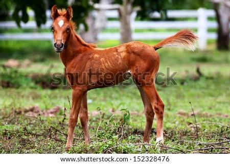 Little pony - stock photo