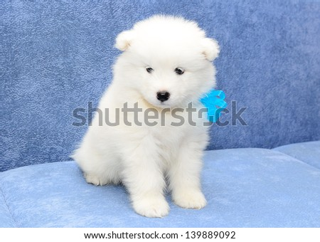 Dog Breeds Part Pom Part Husky Small Dogs | Dog Breeds Picture