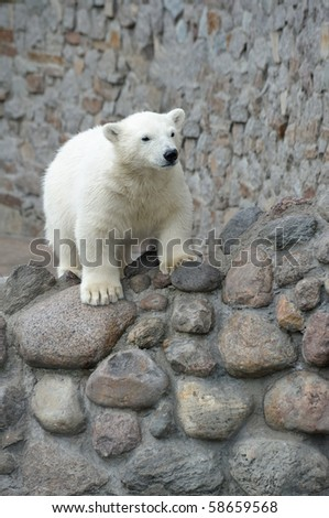 Little pretty white polar bear - stock photo