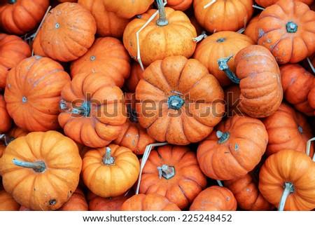 Little pumpkins background - stock photo