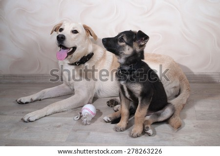 Little puppy and dog lies on gray floor - stock photo