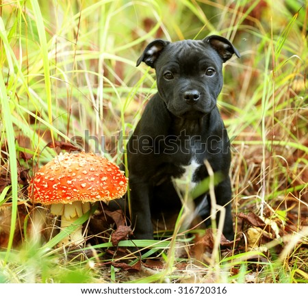 Little puppy in the grass with a mushroom - stock photo