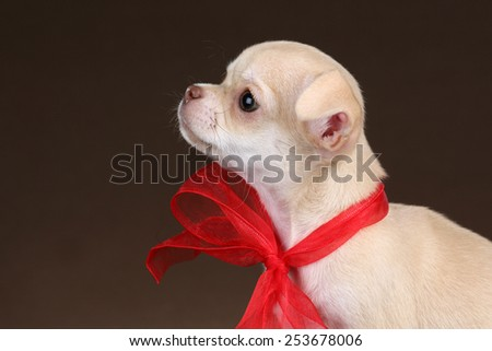 Little puppy looking up, portrait in profile - stock photo