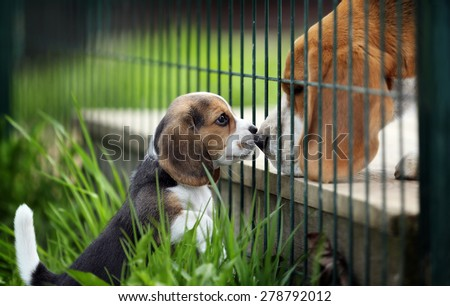 Little Puppy met with a big dog - stock photo