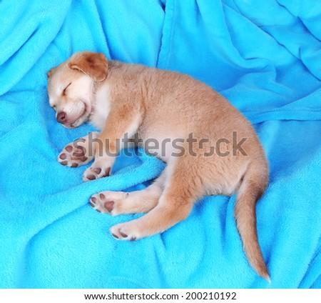 Little puppy sleeps on color plaid background - stock photo
