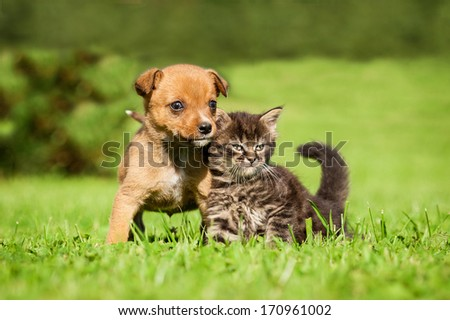 Little puppy with  tabby kitten sitting on the grass