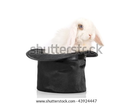 Little rabbit at black hat isolated on a white background